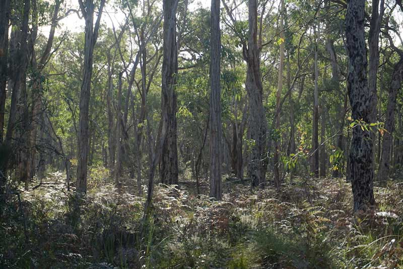 Carbon Neutral with EcoAustralia credits