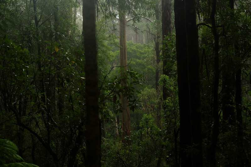 The Lavers Hill project in Victoria's Otway Ranges
