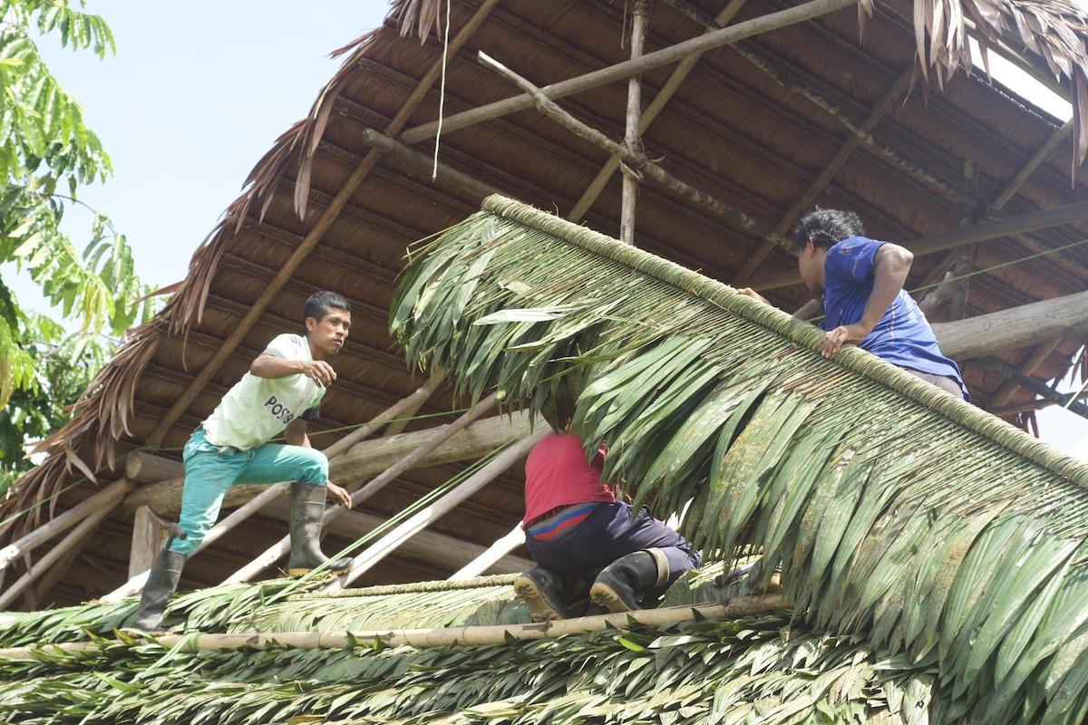 Images: Men repairing the Maloca roof using expertly woven palm leaves to keep rain out.