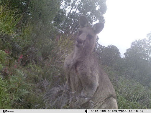 Evidence of Myamyn's local residents was captured by a motion sensor camera that was onsite for a year