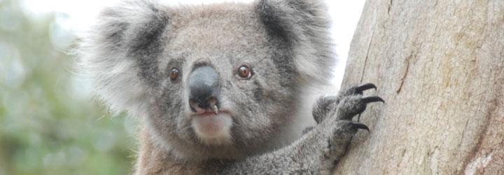 Myamyn Conservation Project, Australia