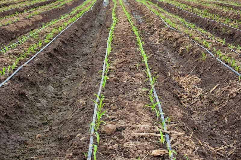 Plantation Supply Chain
