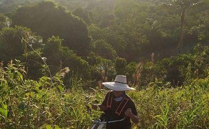 amazonia-project-3.jpg