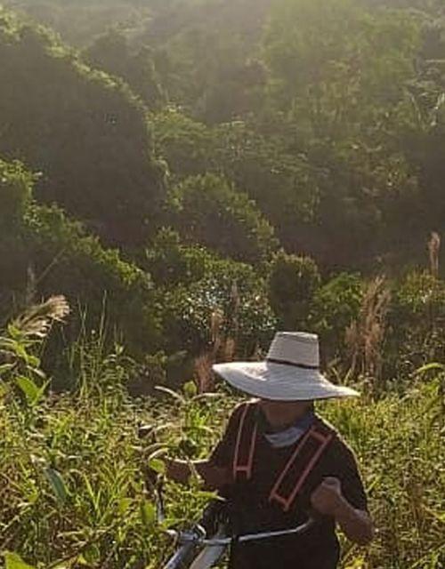 Amazonia Project