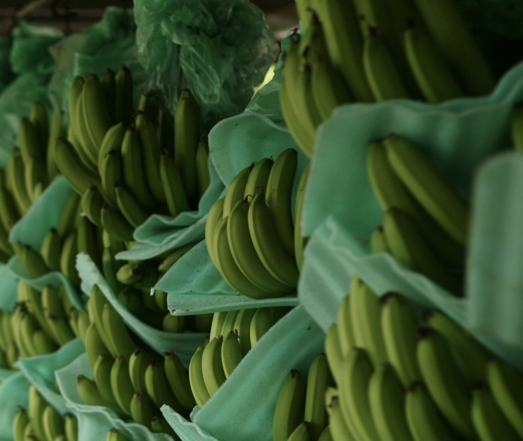 Case study - World´s first AWS group certification for eleven banana farms in Colombia