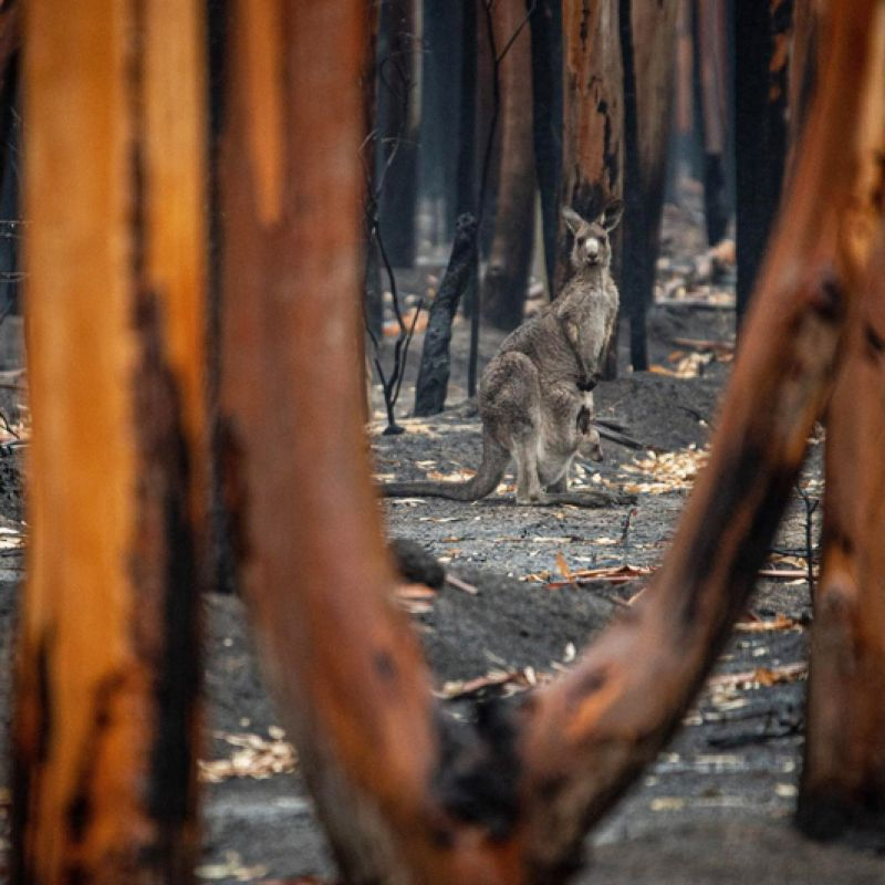 Saving The Savanna: Indigenous Fire Management Projects Across Australia
