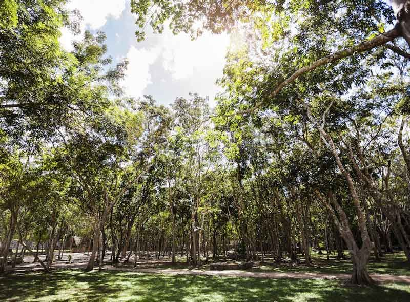 Deforestation Free Growth