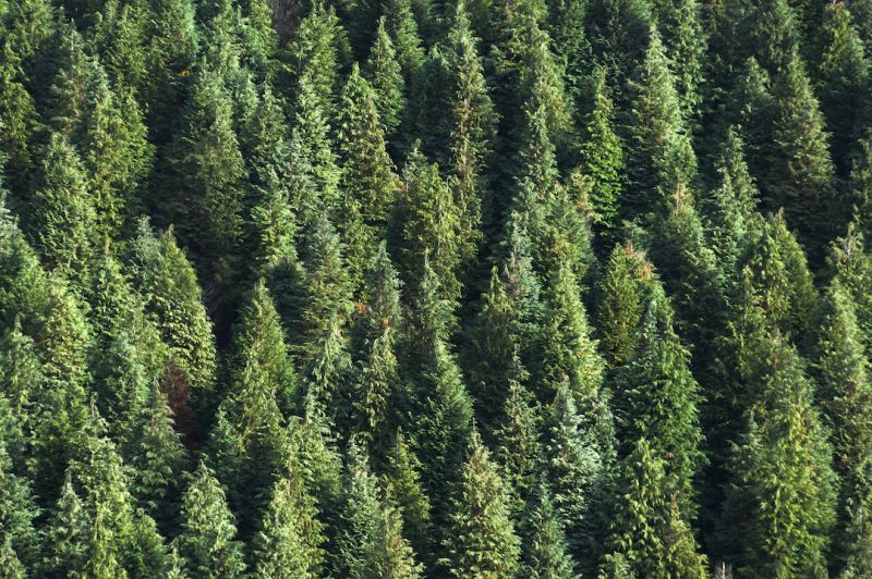 Become a leading forest steward: Monitor, mitigate and report forest risks in your supply chain