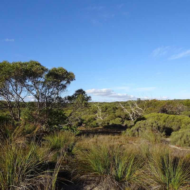 Taking Carbon Offsets further with Biodiversity: Mount Sandy