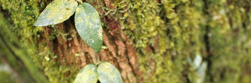 Back To the (Supply Chain) Roots - Nipping Deforestation in the Bud