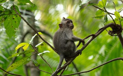 funding-opportunity-nature-based-climate-action-monkey-banner-south-pole-banner.jpg