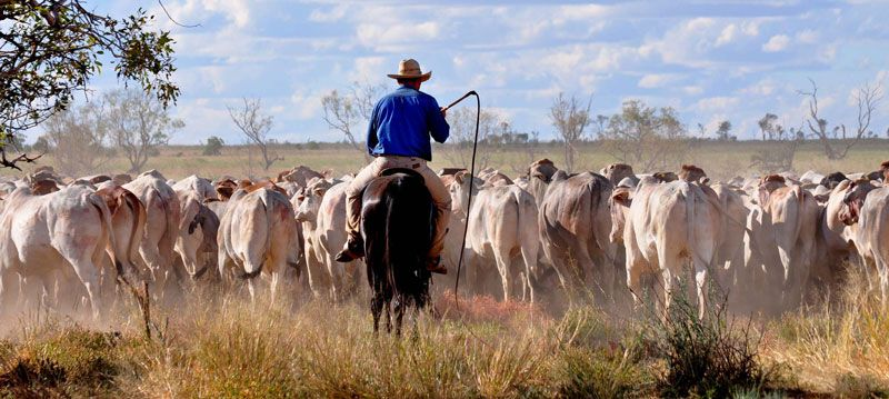 The new 'herd aggregation' method allows smaller graziers to earn carbon credits for the first time