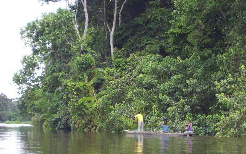 isangi-forest-conservation-timeline-image-1-1.jpeg