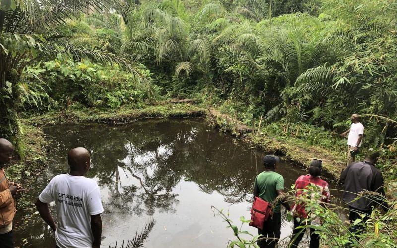isangi-forest-conservation-timeline-image-4.jpeg