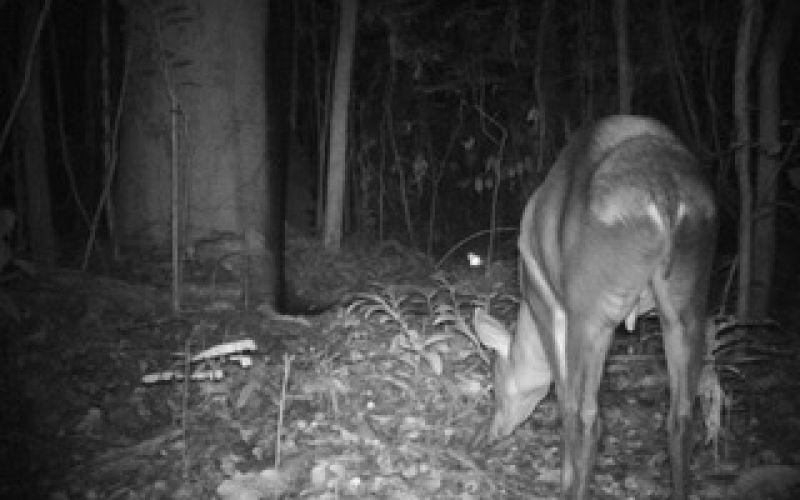 isangi-forest-conservation-timeline-image-5.jpeg