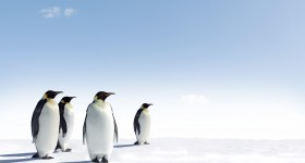 South Pole Group completes incubation cycle and sells investment climate data advisory unit to ISS