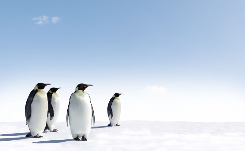 South Pole Group completes incubation cycle and sells subsidiary Climate Neutral Investments (CNI)