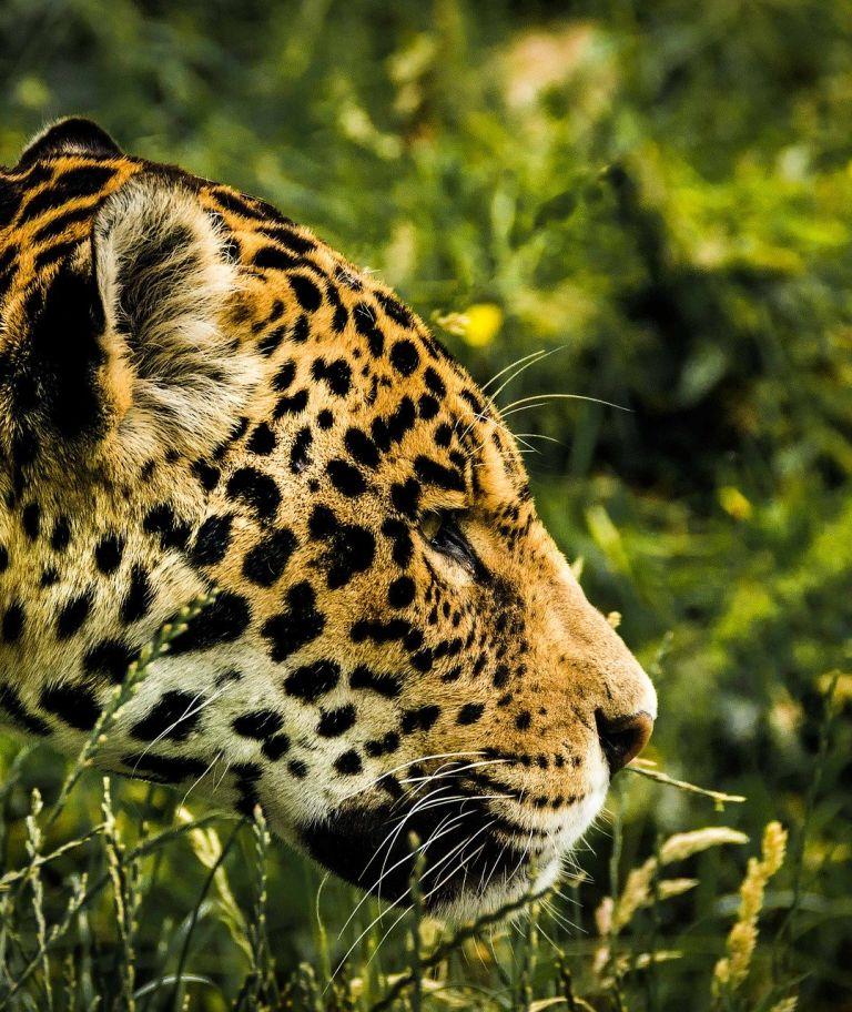 Jaguar connection fund case study