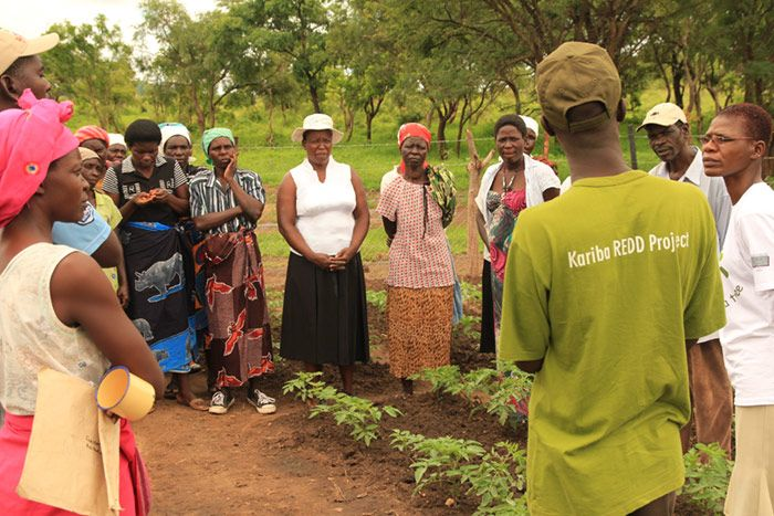 Turning Kariba green: conservation farming at the forest protection project