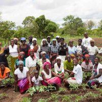 The community members in Hurungwe take pride in their work around their Nutritional Garden (Tashinga)