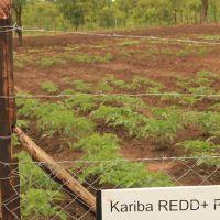 Kariba_REDD+_project