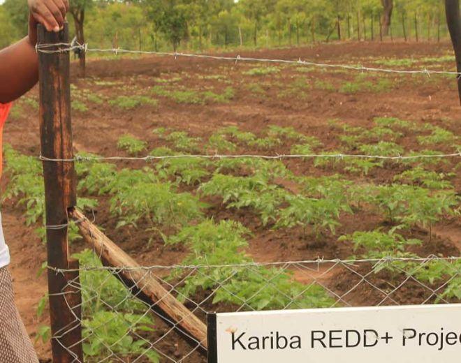 kariba-redd-project8-1920x580.jpg