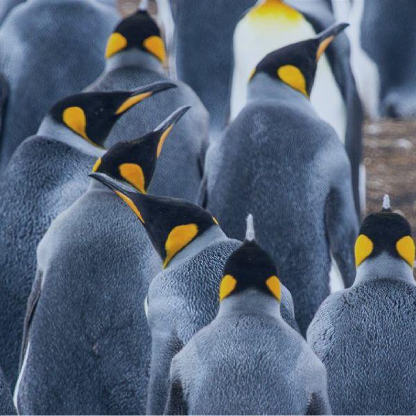 penguins-1920x670-shade.jpg