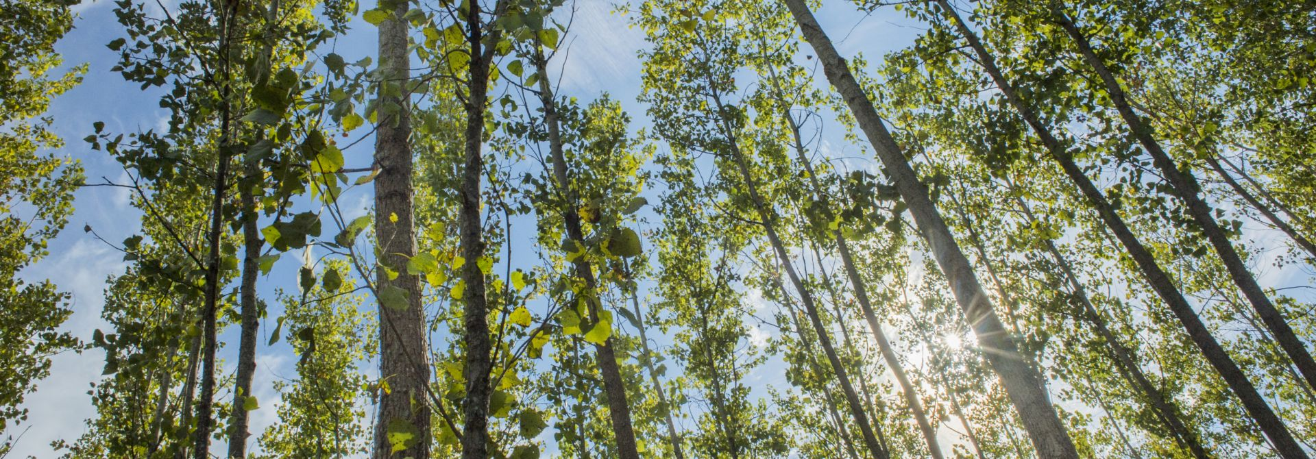 Lower Mississippi Valley Reforestation