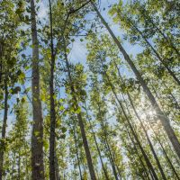 Leading Sustainably:  The importance of a sustainability-savvy board