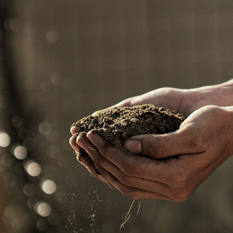 It all starts with soil: how regenerative agriculture can help curb climate change
