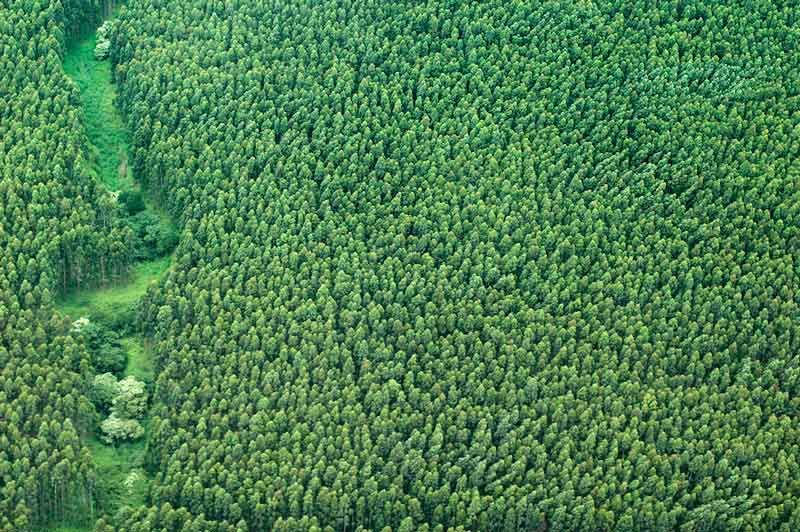reveals deforestation 'hotspots' along supply chains