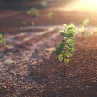 Sustainability Funds
