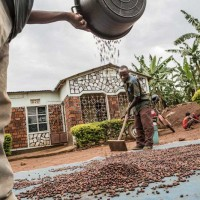 Tanzania Insetting Project